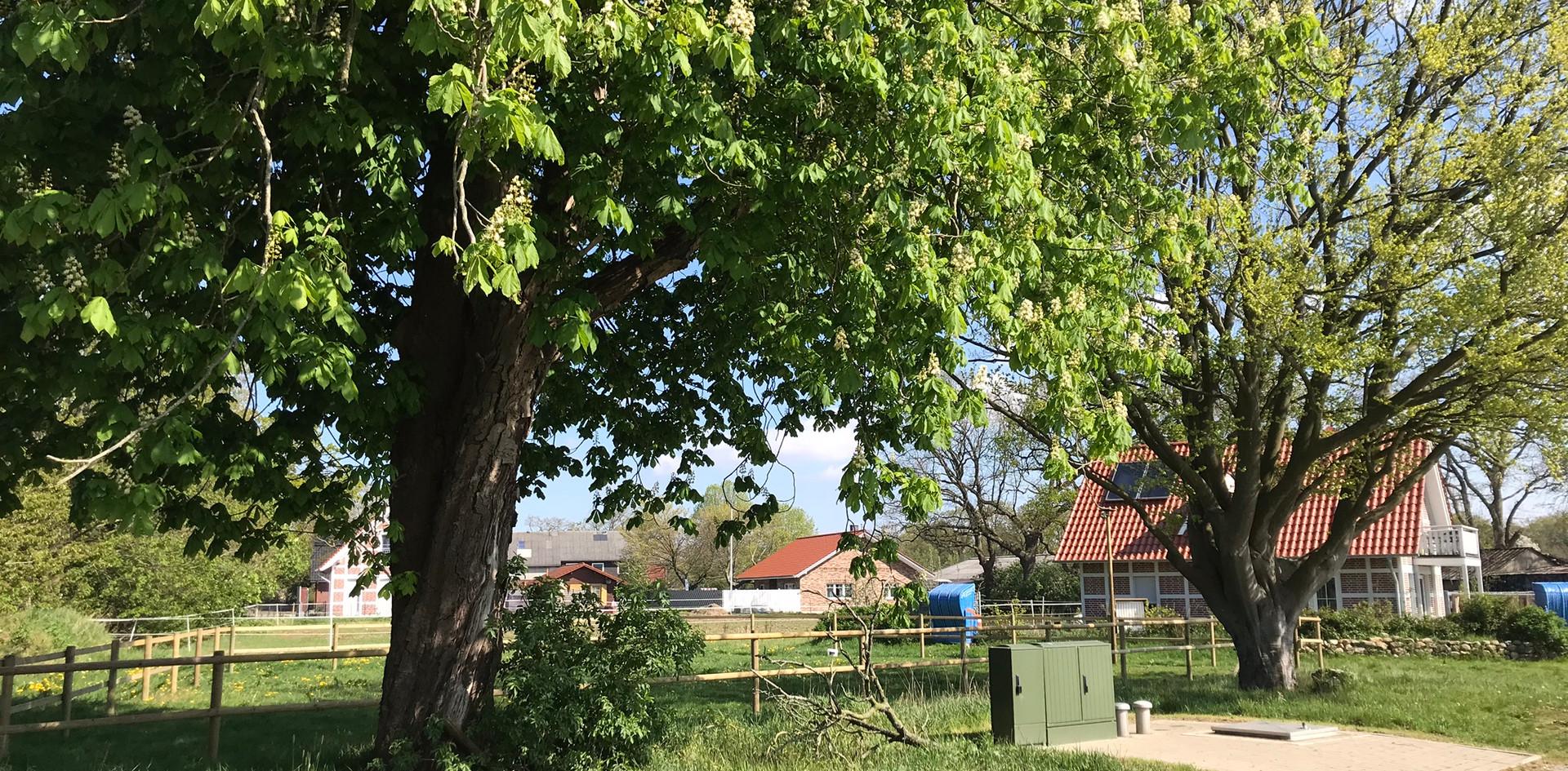 Cuxhaven Holte-Spangen Im Dorf
