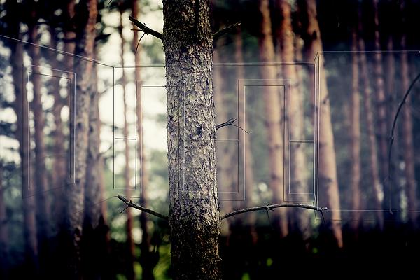JENSEN's Træ & Lister | hårdttræ
