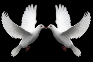 TWO DOVES ...