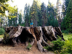 Unique experinces, kings canyon, tree stump, huge tree stump, fun for the kinds, busy mom travel ideas
