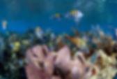 snorkel tour bermuda