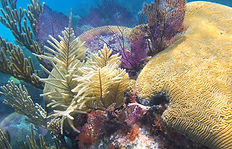 snorkeling reef in bermuda
