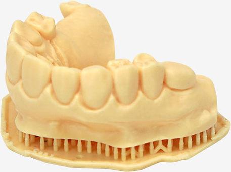 LC-Dental-Dental-Model.jpg