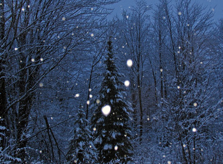 NATURE NUGGETS: A BIRTHDAY SNOWSTORM BY SALLY BAIR