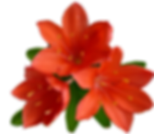 flower-2900916_1920.png