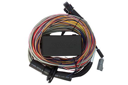 Haltech Elite 550 Premium Universal Wire-in Harness LENGTH: 2.5m (8')