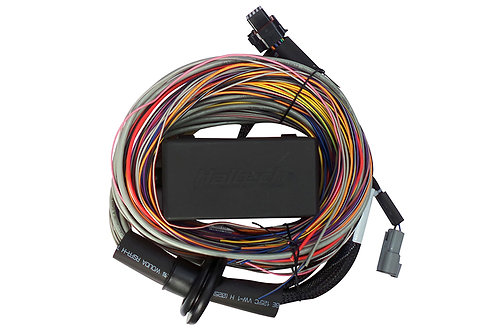 Haltech Elite 750 Premium Universal Wire-in Harness LENGTH: 2.5m (8')