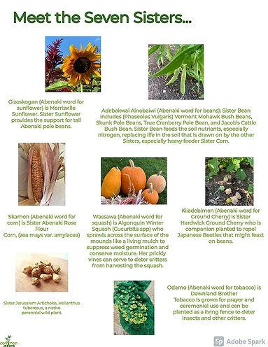 Back_Seven Sister Farm Infographic.jpg