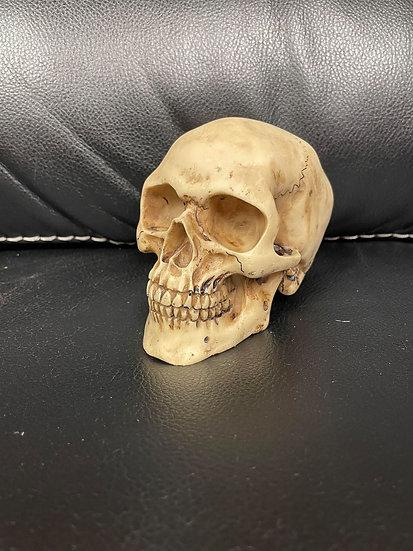 Shango Skull Signed!