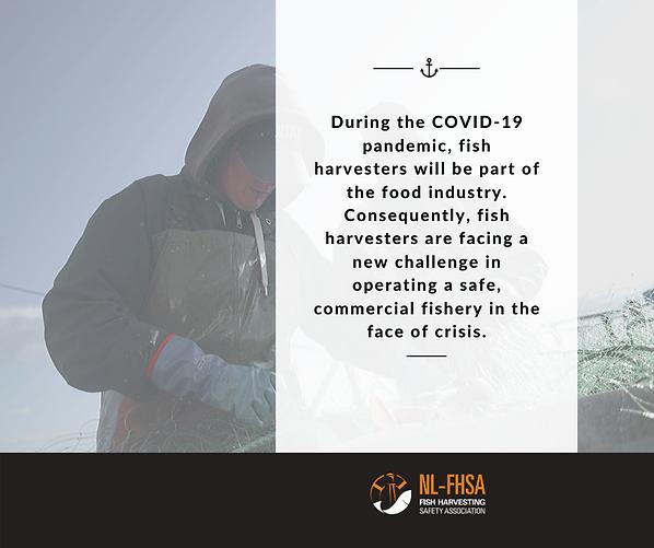 COVID-19 fish harvester advertorial