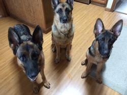 Dina, Leia & Zeig