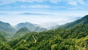 ecosecurities y Hartree lanzan $1.5bn para apoyar la restauración de hábitats en América Latina