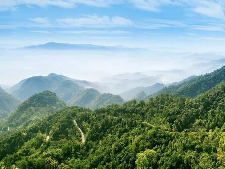 ecosecurities and Hartree launch $1.5bn habitat restoration effort across Latin America