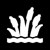 noun_Wetland_6275.png