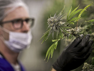 Veterans are key as surge of states OK medical pot for PTSD