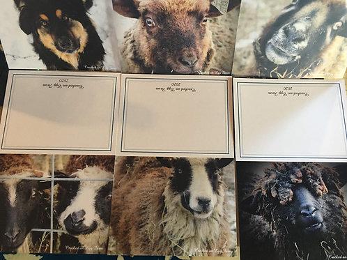 Farm Animal Photo Greeting Cards