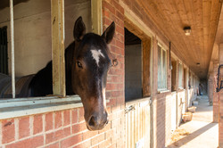 27. 181102-483 Horse