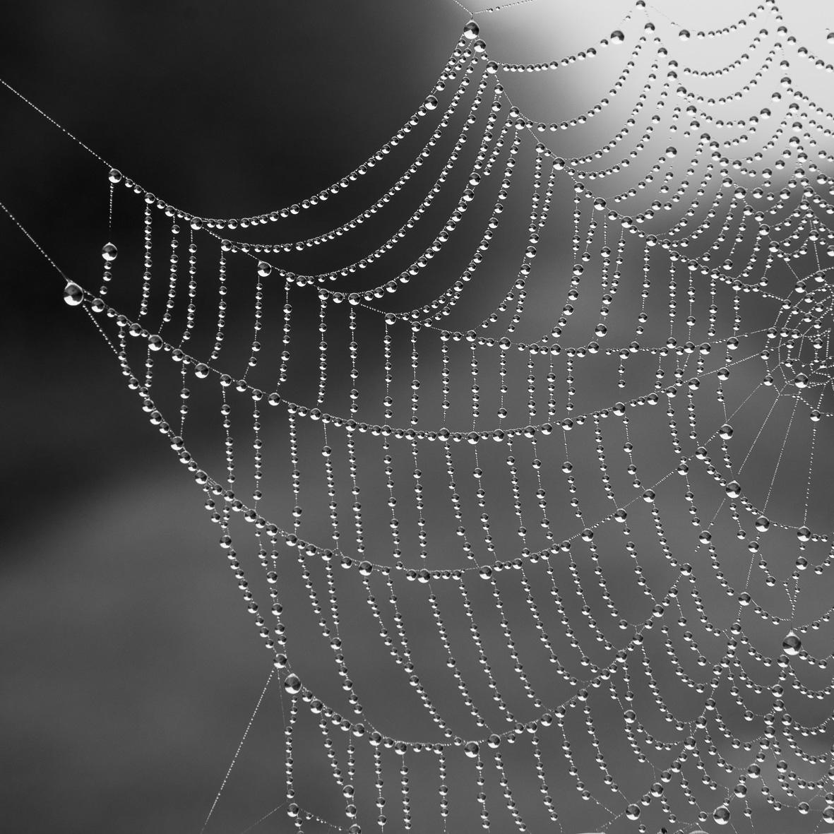 150928-41 Jewelled Web