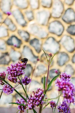 Bee to stone