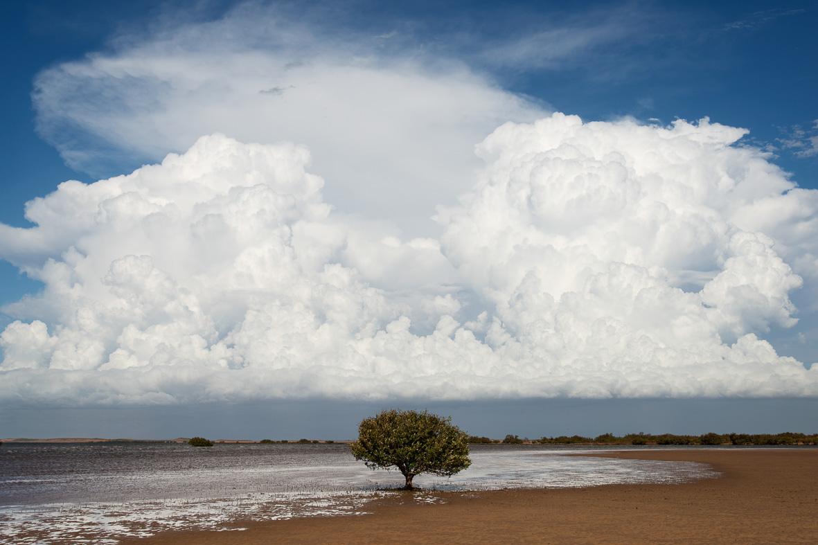 140310-284 Mushroom Clouds & Mangrove