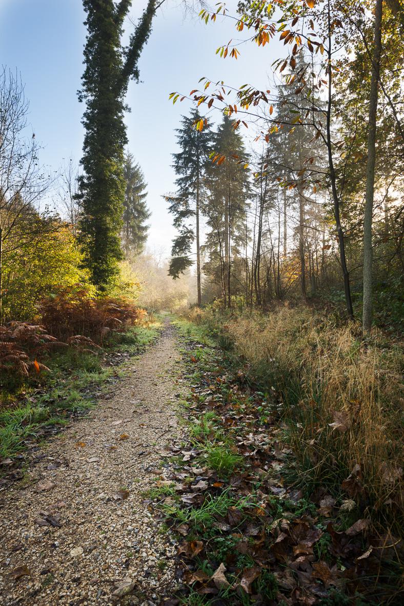 171102-143 Autumnal Walk no Dana