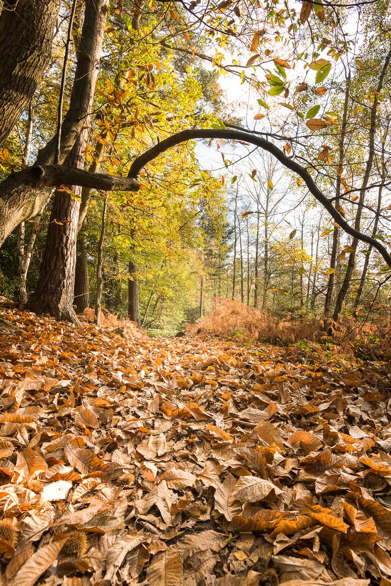 171102-139 Gateway to Autumn