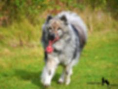 Spaß_mit_deinem_Hund_AP.jpg