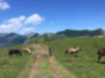 Montée-Hautacam-Gravel-Pyrénées.jpg