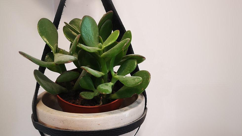 suspension plante n°4