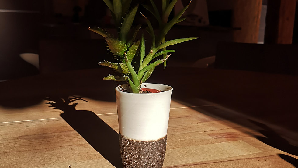 Pot et plante N°11