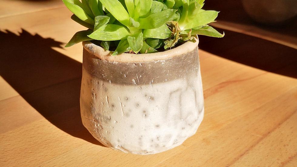 Pot et plante N°10