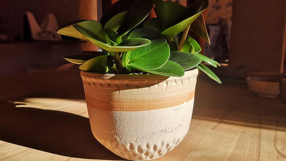 Pot et plante N°13
