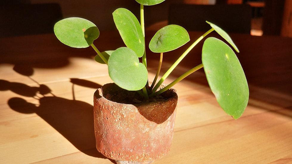 Pot et plante N° 6