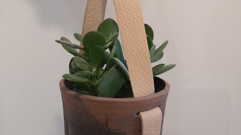 Suspension et plante N°2