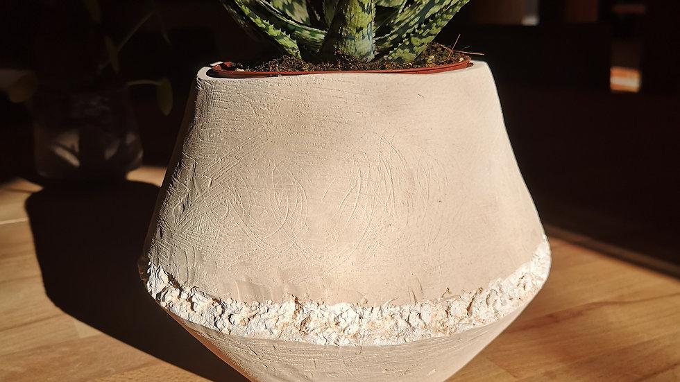 Pot et plante