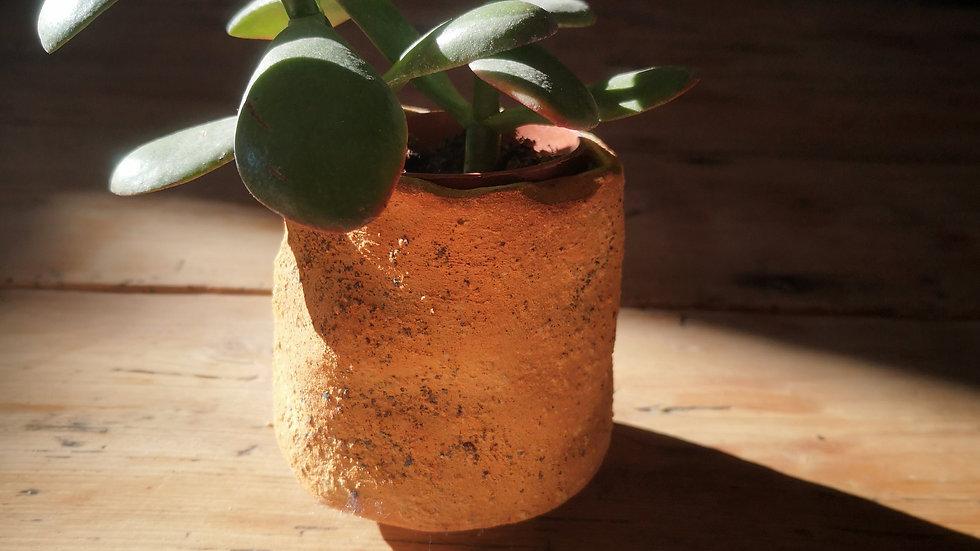 pot et plante n° 3