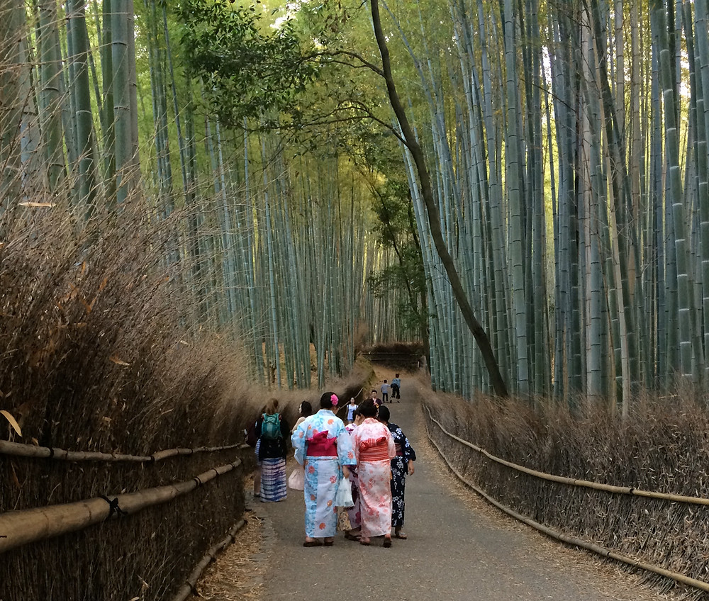 People in kimonos walking down a tree lined avenue. Photo credit Jude Brosnan.