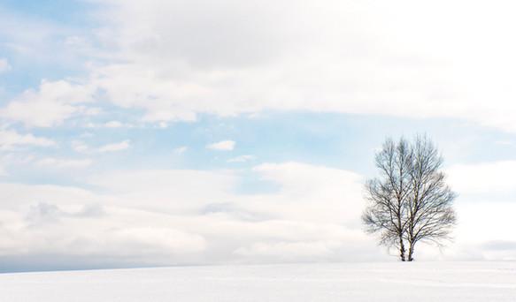 Biei in snow.