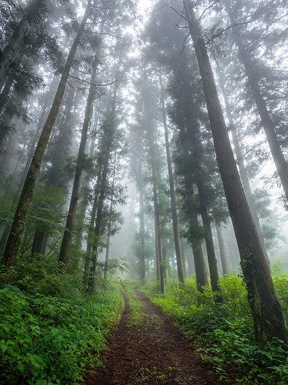 Boseong Mist
