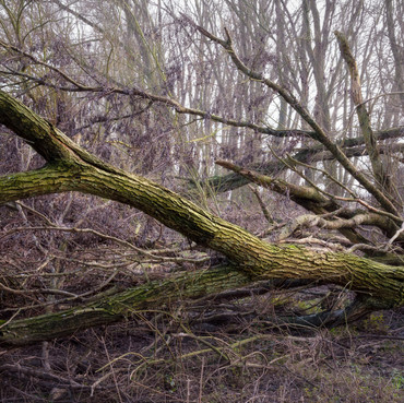 Collection of broken branches.