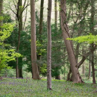 Cranham Woods, Gloucestershire