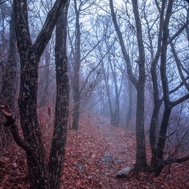 Foggy Morning, Jirisan Trail