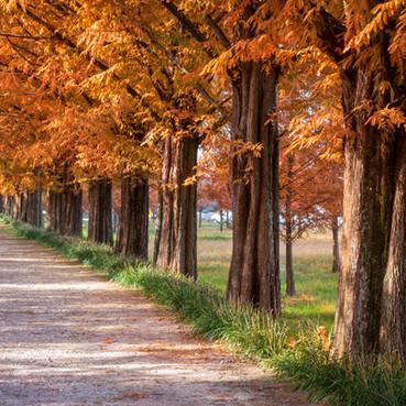 Autumn at Damyang
