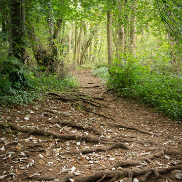 Rooted Path