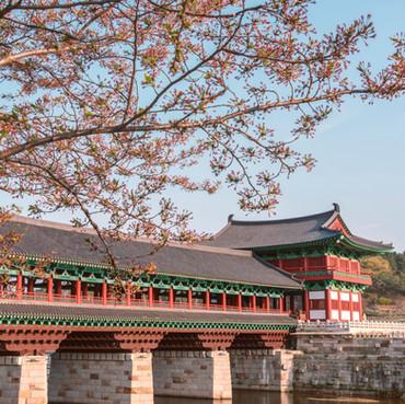 Spring at Gyeongju Bridge