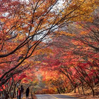 at Naejangsan National Park, Jeongeup, Jeollanamdo. 내장산국립공원, 정읍시, 전라남도