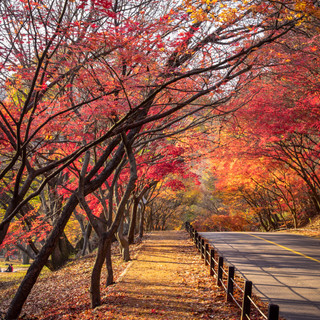 Autumn lined path