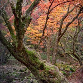 Moss trees.