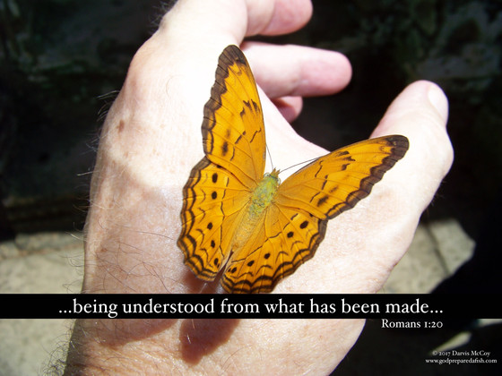 The Butterfly and The Atheist