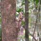 Boyds Dragon in forest.jpg